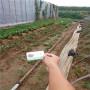 艷麗草莓種苗,內蒙古四子王旗艷麗草莓種苗苗圃,艷麗草莓種苗廠家報價