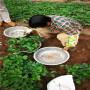 起隆種植越秀草莓種苗達州市價格采購