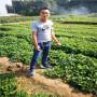 丹莓一號草莓種苗報價四川金川