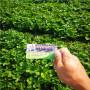 隋珠草莓種苗基地遼寧皇姑區