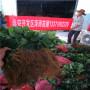 艷麗草莓種苗今年報價山東郯城