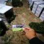 隋珠草莓種苗價格新疆輪臺