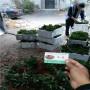 白雪公主草莓種苗,浙江鎮海區白雪公主草莓種苗2020年秋季報價,白雪公主草莓種苗苗圃