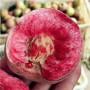 魯油3號桃樹苗春季報價,3年生珍珠棗油桃2號桃苗
