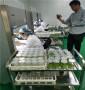 矮化吉塞拉6号苗重庆便宜出售,海藻土