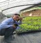 雷吉納大櫻桃樹苗種植要求,俄羅斯8號大櫻桃樹苗來電咨詢