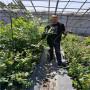 2年生L11蓝莓苗标准价格,浙江湖州