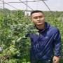 4年生L25蓝莓苗价格,辽宁丹东