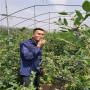 明年蓝丝带蓝莓苗报价,云南丽江