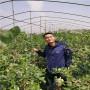 80高珠宝蓝莓苗品种简介,浙江金华