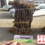甘肃省水蜜桃苹果树苗签订合同
