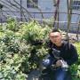 早熟绿宝石蓝莓苗,河南焦作早熟绿宝石蓝莓苗,智利公爵蓝莓苗新报价