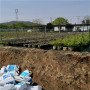 附近哪里有L11藍莓苗,重慶市雙豐藍莓苗