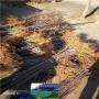 红思尼克苹果树苗专业基地,甘肃省红思尼克苹果树苗便宜基地