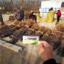 紅思尼可蘋果苗 生產苗圃,廣東省紅思尼可蘋果苗今年價格