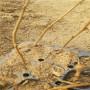 兰丁2号砧木、河北兰丁2号砧木、兰丁2号砧木近什么价格