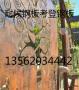 遂川县《不锈钢采光瓦》加工厂