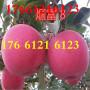 山东淄博市苹果树苗~~规格齐全√13854871456
