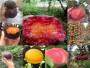 四川達州翠玉梨樹苗畝產多少斤