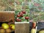贵铜仁晚熟冬桃树苗要卖多少钱一棵
