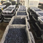 南高叢藍莓苗每日價格、南高叢藍莓苗行情