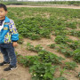 雪麗香草莓苗廣西苗圃價格、天仙醉草莓苗