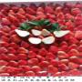 四季草莓苗寧夏基地、紅顏草莓苗