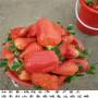 保證品種的越豐草莓苗,吉早紅草莓苗苗圃