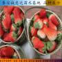 咖啡草莓种苗诚信经营、辽宁省咖啡草莓种苗直销基地
