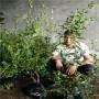 黎明女神藍莓苗怎么賣、黃岡市最近的地方