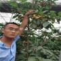 4公分沙王櫻桃樹苗便宜供應、沙王櫻桃樹苗價格走勢圖