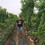 美國一號櫻桃樹苗、天津市福興櫻桃苗夏季管理和養護