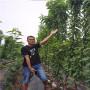 u2-7樱桃树苗、广东省波尔娜樱桃树苗成长特性