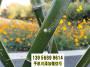 满洲里 竹篱笆碳化竹围栏竹板条河北高阳竹栅栏