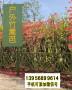 金灣竹籬笆竹欄桿南寧市西鄉塘竹圍欄pvc草坪護欄木柵欄