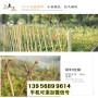 象州竹篱笆竹护栏廊坊三河竹围栏pvc栏杆木栅栏