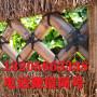 歡迎##山東日照上海竹籬笆價格##實業集團