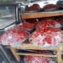 草莓苗销售山西省 草莓穴盘苗产地