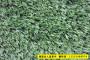 新聞:新河縣人工草坪價格多少@廠家直銷價格