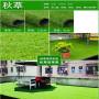 厂商报价:西人造塑料草坪(免费咨询)