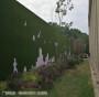 1.5厘米济宁市围挡12mm草坪(案例展示:济宁市:阳谷县)