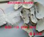伊金霍洛旗称心的涂料用贝壳粉优发娱乐官网网页版