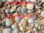 达州达县品质好的贝壳粉价格聪明之选