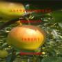 柱状梨二号梨树苗1公分价格多少钱、柱状梨二号梨树苗联系方式
