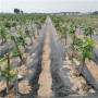 景德镇早红宝石樱桃苗种植高产技术