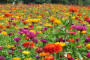 新闻:梅州护坡绿化草种狗牙根新闻资讯