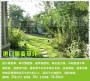 新聞:漯河高速公路綠化護坡坡上種什么草好多少錢一斤多少錢