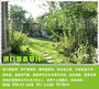新闻:随州护坡种草多少钱一平米欢迎质询长鸿园林[股份@有限公司]欢迎您