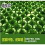 新闻:石家庄专用刺槐种子需要多少钱