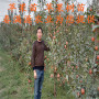 北红苹果树苗出售
